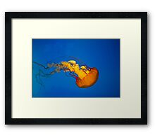 Life Aquatic Framed Print