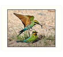 Rainbow Bee-eater 403 Art Print