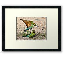 Rainbow Bee-eater 403 Framed Print