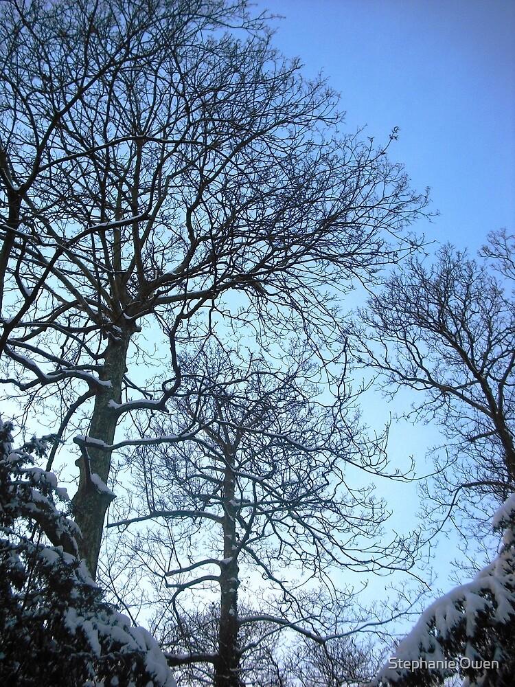 Treescape by Stephanie Owen