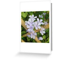 Delicate Flowers on Bamboo Fence Greeting Card