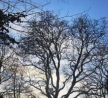 Winter skies by Stephanie Owen