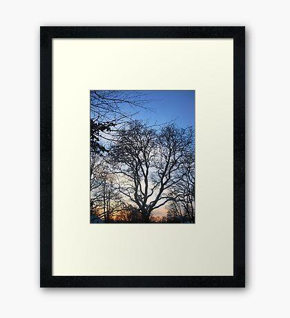 Winter skies Framed Print