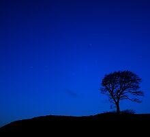 Lonely Tree by AndyCh