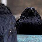 Crow by Tanya J