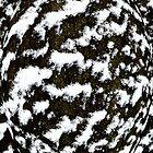Snow Bubble by John Gaffen