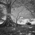 The Giant Fig by Mel Brackstone