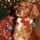 Seamus' First Christmas by SetterSmiles