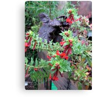 Balck leaves Red Flowers  Canvas Print
