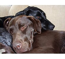 Its a Dogs Life Photographic Print