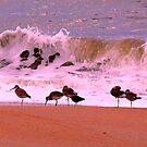 Assateague Island beach by dandefensor