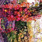 Rainbow Trellis by dandefensor