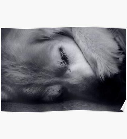 Sally The Dog Poster