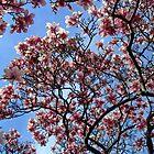 A Magnolia flower tree by Joe Bashour