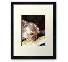 Mr. Selfish Snickers Won't Share His Toys Framed Print