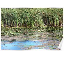 Monet-esque Waterlillies - Prince Edward County Poster