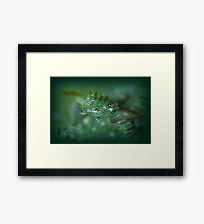 Rain drops are falling  Framed Print