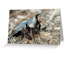 Rowdy beetle Greeting Card