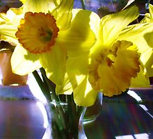 Daffodils basking in the sun by susiqfc
