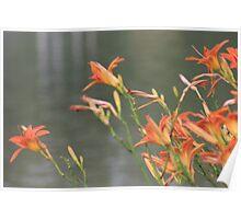Tiger Lillies - Memorial Park, Port Credit, ON Poster