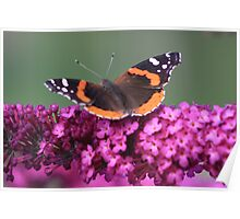 Tiger Moth on a Butterfly Bush - Port Credit, ON Poster