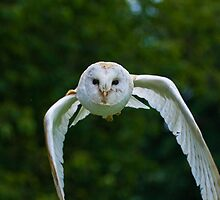 Gyzmo Barn Owl by Elaine123