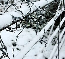 Snow covered barbed wire fence  by fhcphotos