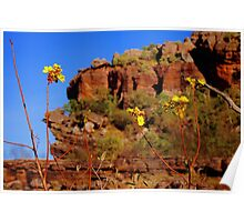 Wildflowers in Escarpment Country Poster