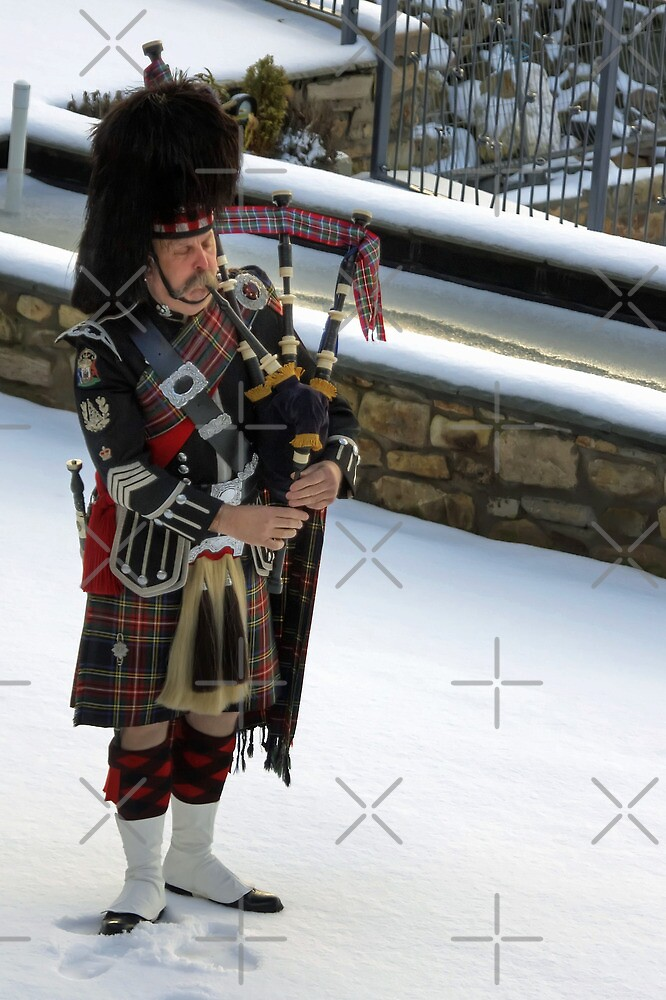 Piper in the snow by Tom Gomez