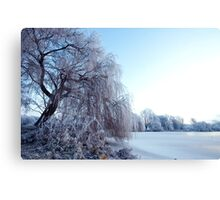 Weeping willow in morning frost Canvas Print