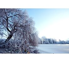 Weeping willow in morning frost Photographic Print