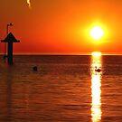 The sunrise swan by jchanders