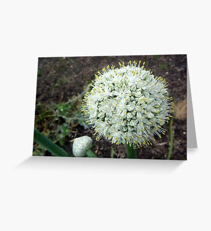 Onion Bloom Greeting Card
