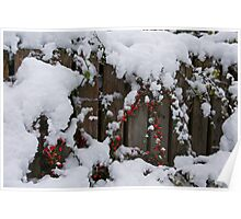 Rowan Bush in the Snow Poster