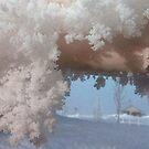 Snowflake Shadows by © Loree McComb