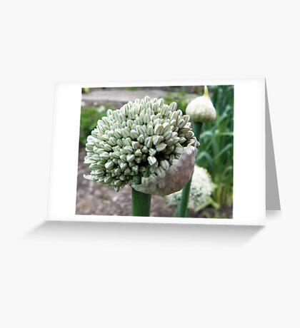 Onion Bloom III Greeting Card