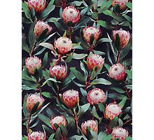 Evening Proteas - Pink on Charcoal Photographic Print