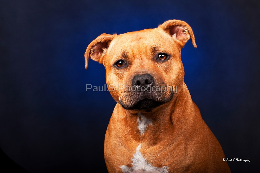 Indy by Paul.S Photography