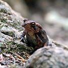 Appalachian Toad by David Lee Thompson