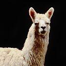 La Llama by Constanza Caiceo