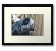 Colobus monkey Framed Print