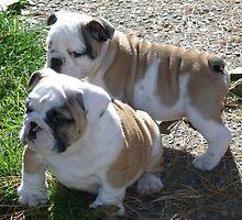 My chubby babys by honeygirl1019