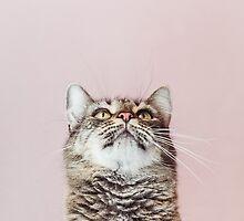 Beautiful cat looking up by veralair