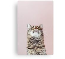 Beautiful cat looking up Canvas Print