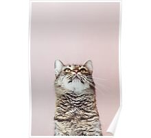 Beautiful cat looking up Poster