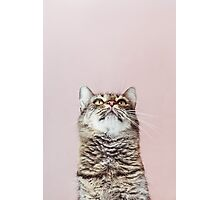 Beautiful cat looking up Photographic Print