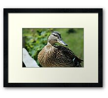 My best side please Framed Print