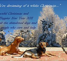 Merry Christmas to all the pound dogs by KanaShow