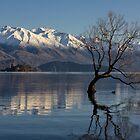 Wanaka Lake Tree 6 by Charles Kosina