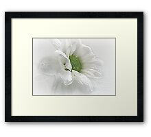 ~ White Beauty ~ Framed Print